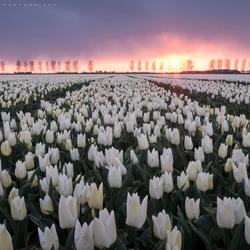 Hollandse zonsondergang