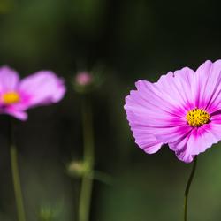Kleurijk fleur