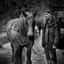 ploegpaard
