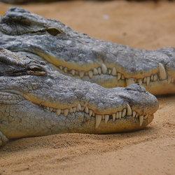 2 Kroko's.