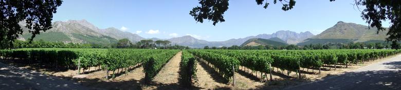 Winelands Zuid Afrika -