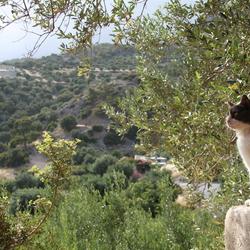 Wakker worden op Kreta
