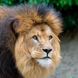 Koning.