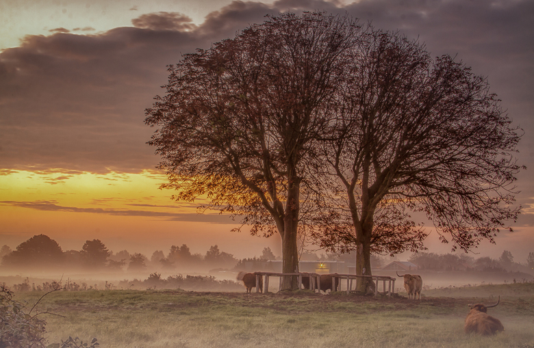 Foggy Fields - Foggy Fields