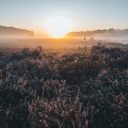 Meadow sunrise.