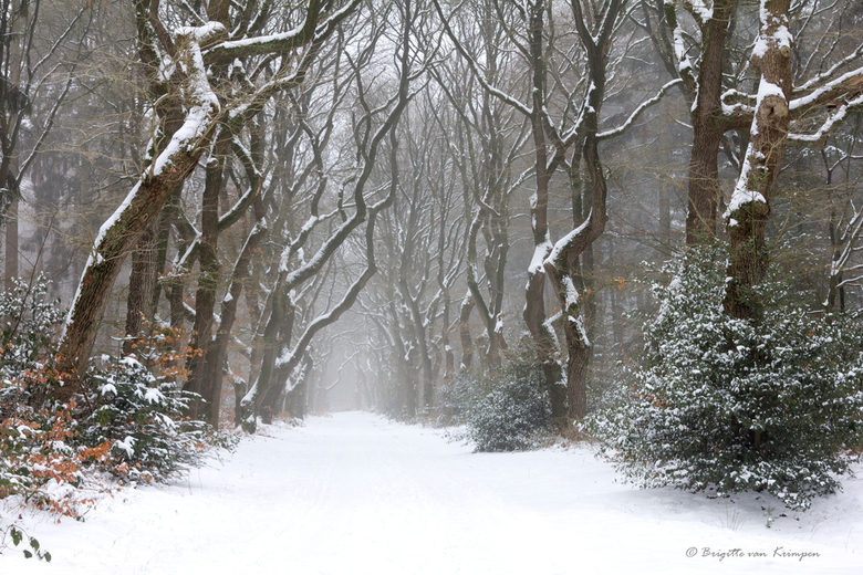 Winter Mood II - ook deze is van afgelopen vrijdag, het leek wel een sprookje om in te mogen wandelen. Je blijft ook fotograferen