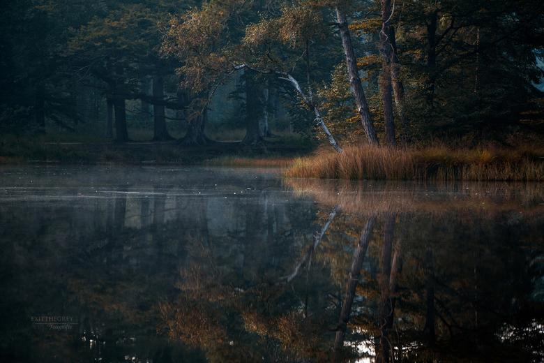 Fluister stil ... - In alle vroegte van de eerste herfstdag van 2020. Freulevijver in het bos van Olterterp, Friesland.