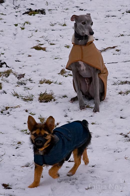 Hondjes - Twee honden die ik tegen kwam in het bos. De kleine was gered uit een spaans asiel en draagt een mondkapje omdat hij alles wat in zijn bekje