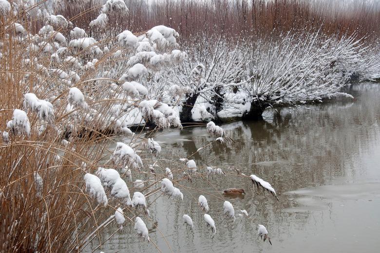 Winter in Rhoonse Grienden - Een dagje fotograferen met krakende sneeuw onder je voeten in het cultuurland-schap van de Rhoonse Grienden? Het leverde