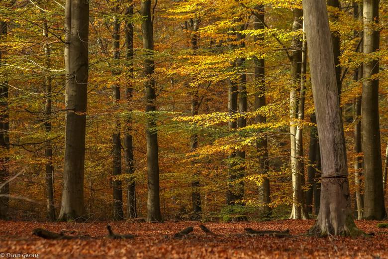 Herfst - Bedankt voor het kijken en de eerlijke reacties op mijn vorige upload, word zeer gewaardeerd.