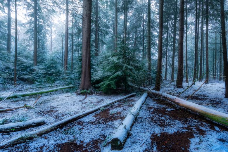 """Lijnen in de sneeuw - Wat een geluk dat ik op pad kon toen het had gesneeuwd <img  src=""""/images/smileys/smile.png""""/>"""