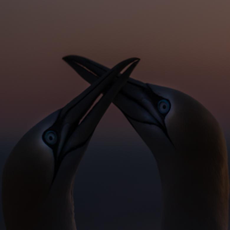 Helgoland - Als het donker wordt, mag ik dan bij jou...