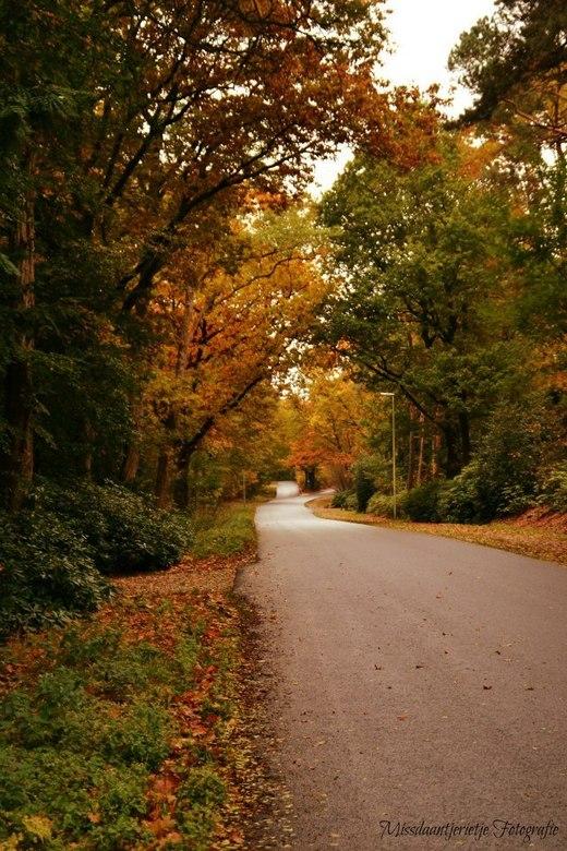 Colors of autumn - Een prachtige herfstdag op een verlaten weg door het bos.