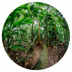 Regenwoud Costa Rica