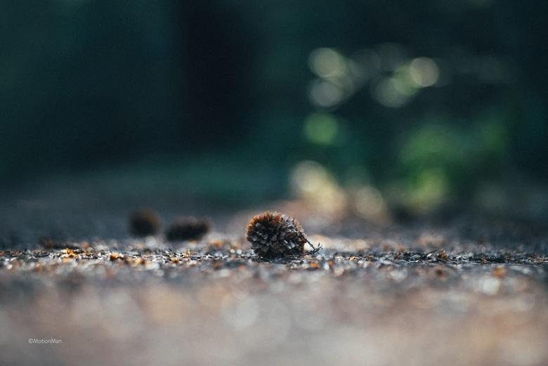 Dennenappel - Dennenappel in het bos.<br /> <br /> <br /> <br /> ©MotionMan