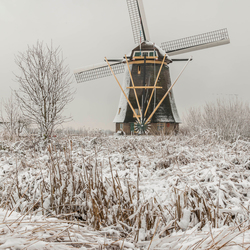 Winter Wonderland Kinderdijk