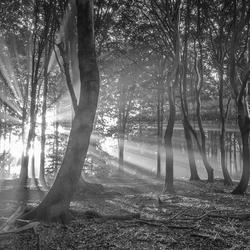 dansende bomen gehuld in zonnestralen