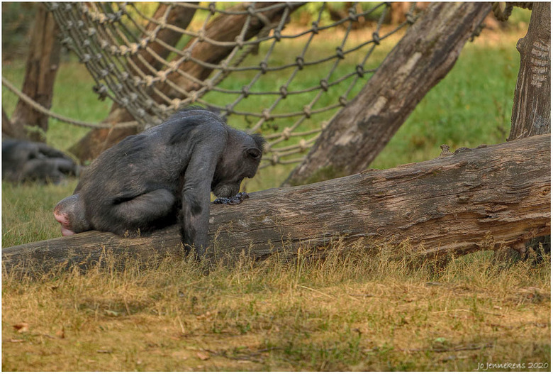Iemand een poepie laten ruiken........ - Een opname uit Burgers Zoo.<br /> Ik wilde eigenlijk géén foto maken ivm te weinig mm&#039;s(foto is gecropt