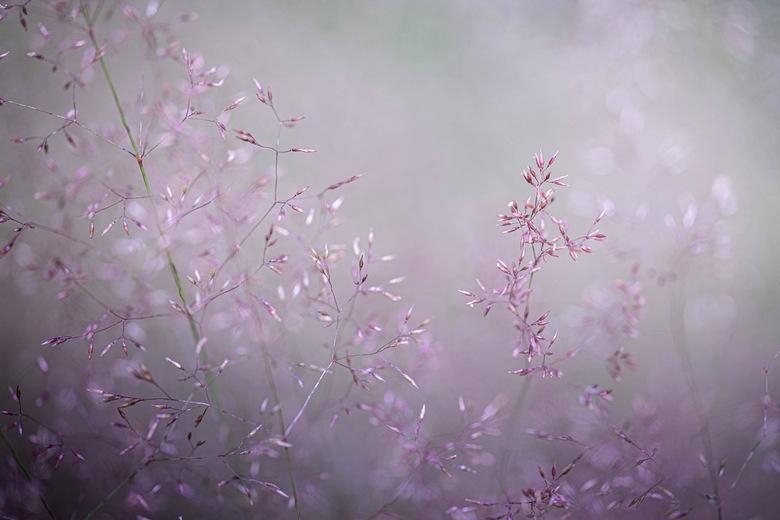 Gras - Zo van, in het veld lopen en geen vlinder of ander insect kunnen vinden