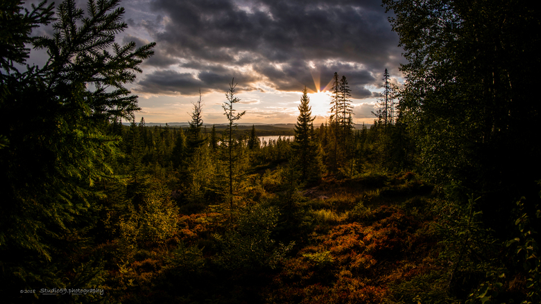 Zonsondergang in Zweden_001 - Zonsondergang in een Zweeds bos tijdens onze vakantie