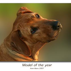 Model of the year