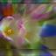 explosie van bloemkleuren................