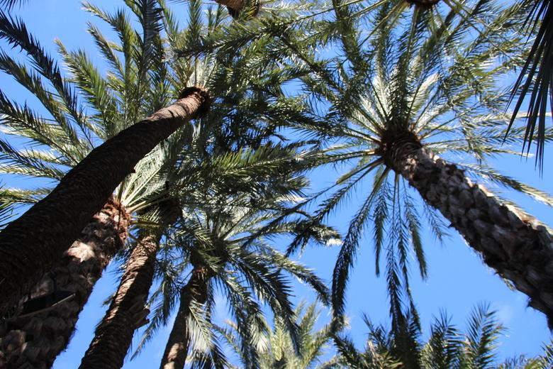 palmen in de blauwe lucht - Mooie palmen in de blauwe lucht