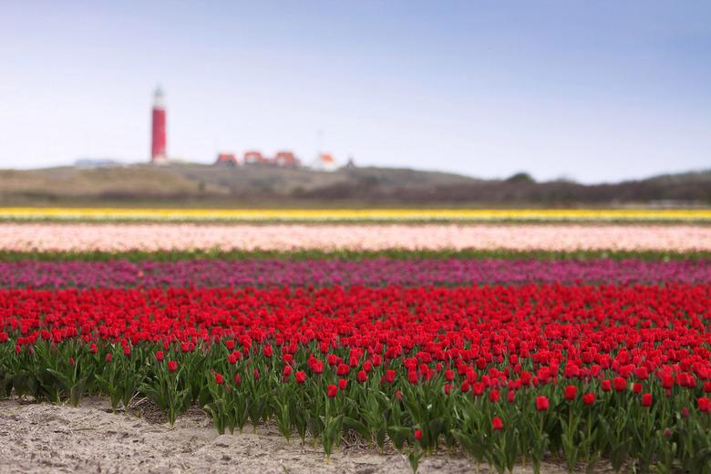 Texel in April - Texel in April