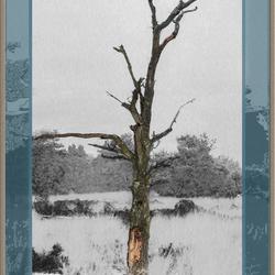 Dode boom op de hei