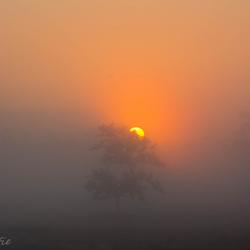Zon achter boom
