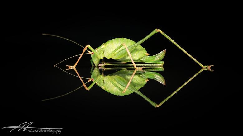 It's not easy being green - Zwartboek (project)<br /> <br /> Het gaat slecht met de insecten. Hun aantallen nemen af als gevolg van veranderingen in