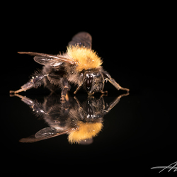 Bee easy!