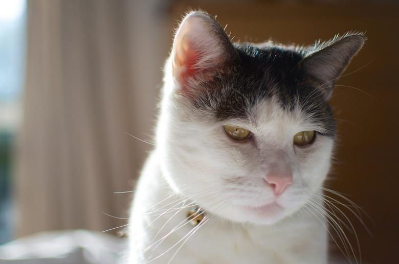 Scooter - Onze kat Scooter, een perfecte kat om mijn nieuwe camera (Nikon D5100) en lens (35mm) uit te proberen. Well chuffed met deze combinatie