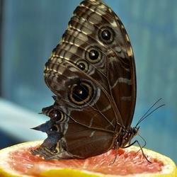 Vlindersnoepgoed