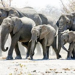 Namibië 145