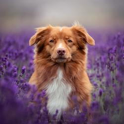 Lavender Hailey