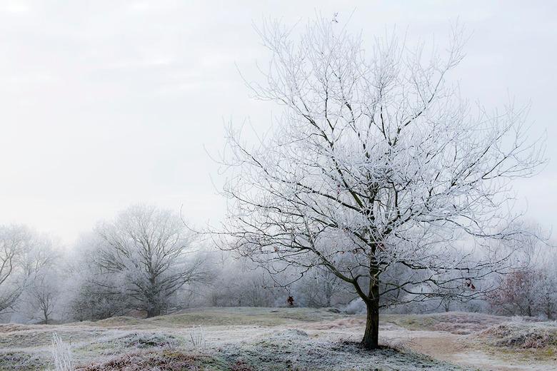 Witte wereld - Deze foto is van een jaar geleden toen we hier in Den Haag één dag een witte wereld hadden vol rijp, wat was dat mooi om te zien en wat
