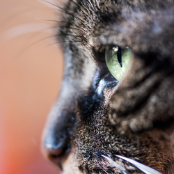 Kattenprofiel