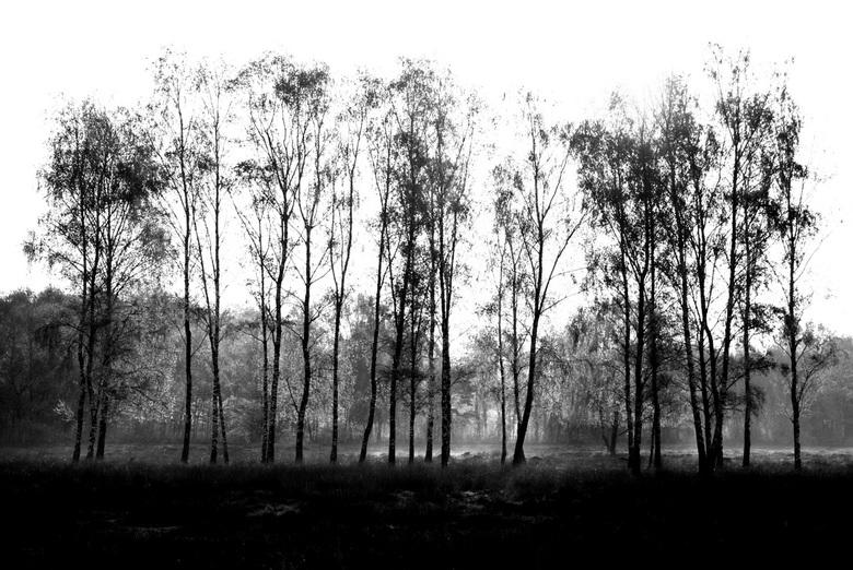 Natuurmonument 't Harde - Vanmorgen in alle vroegte even de hei op geweest. Er hing een mooie nevel boven de grond met een waterig zonnetje hetgeen ee
