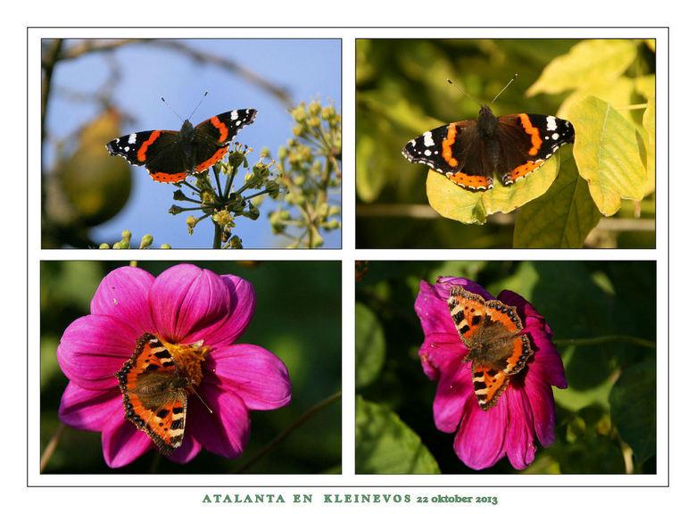 Vlinders  22 okt 2013. - Vlinders  22 okt 2013.J<br /> Gisteren een 50 km fietstocht gemaakt door het mooie Groningerland .<br /> Loppersum,Enum,Lee
