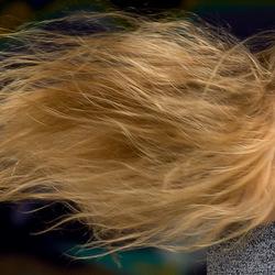 haar in de wind