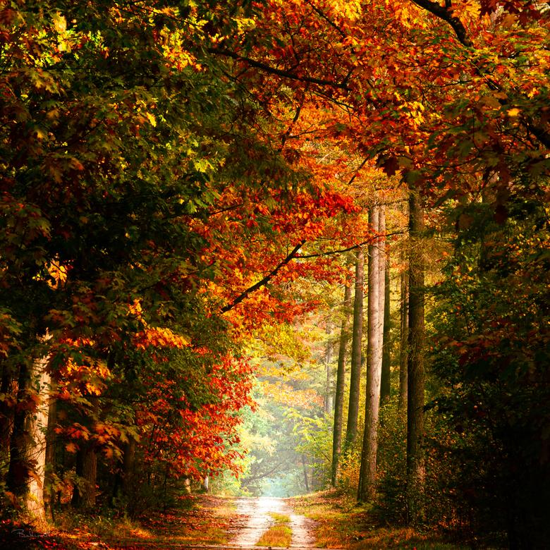 Autumn 2020 -