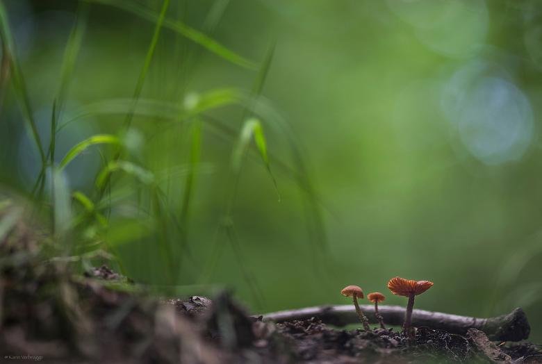 In een paddestoelenwereld