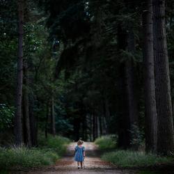Het bos ontdekken