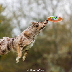 I love the smell of a flying frisbee