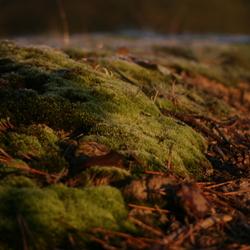 Loonse en Drunense duinen 1
