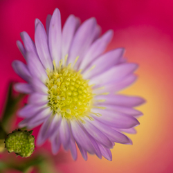 kleurig bloemetje