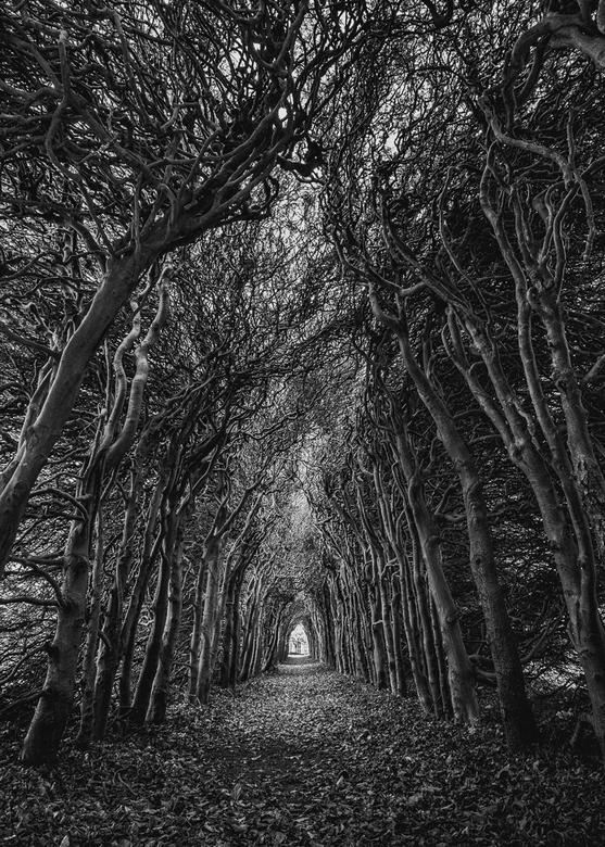 Loofgang - De berceau of loofgang, abdij Sion.<br /> Foto gemaakt oktober 2017.