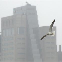 Vogel in Rotjeknor