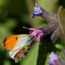 Snoep verstandig, eet nectar